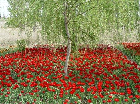"""乌鲁木齐市安宁渠特色小镇建设开工 打造城市""""后花园"""""""